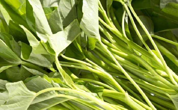 自然農の空心菜栽培